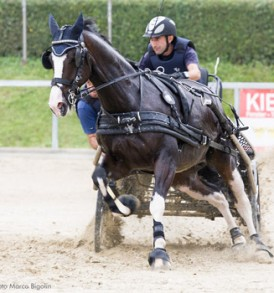 Arnés Leatec IDEAL EQUESTRIAN